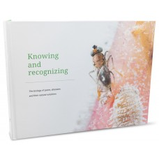 Knowing and recognizing (English)
